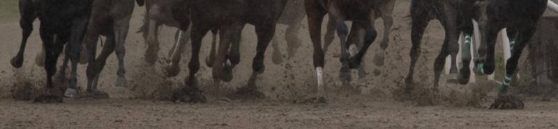 Legs of thoroughbreds