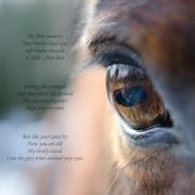 tender eye