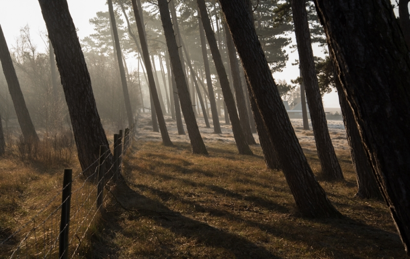 fallande träd