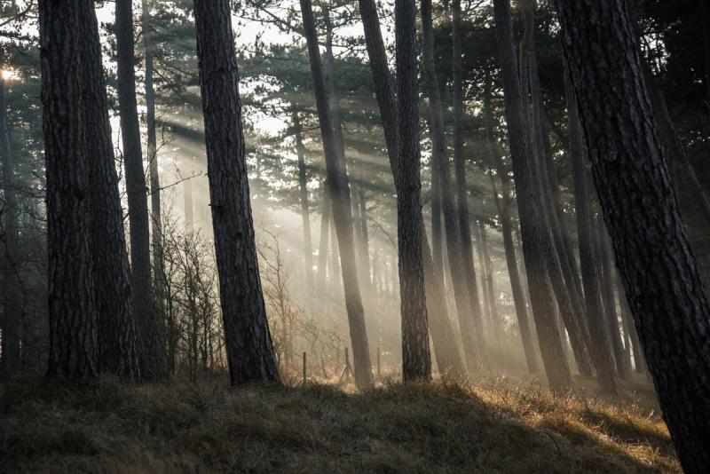soldisiga träd