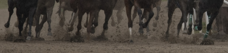 Legs of thoroughbreds